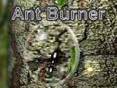 Ant Burner