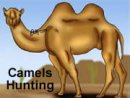Camels Hunting
