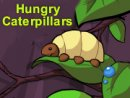 Hungry Caterpillars