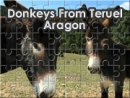 Donkeys From Teruel Aragon