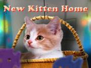 New Kitten Home