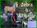 Zebra And Alligator
