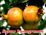 Jigsaw Pomegranate