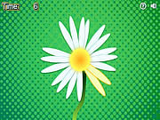 Daisy Petals