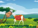 Handsome Little Pony