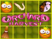 Orchard Harvest