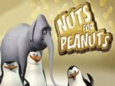 Elephant Nuts For Peanuts