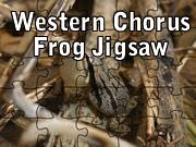 Western Chorus Frog Jigsaw