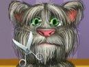 Tom Cat Shaving